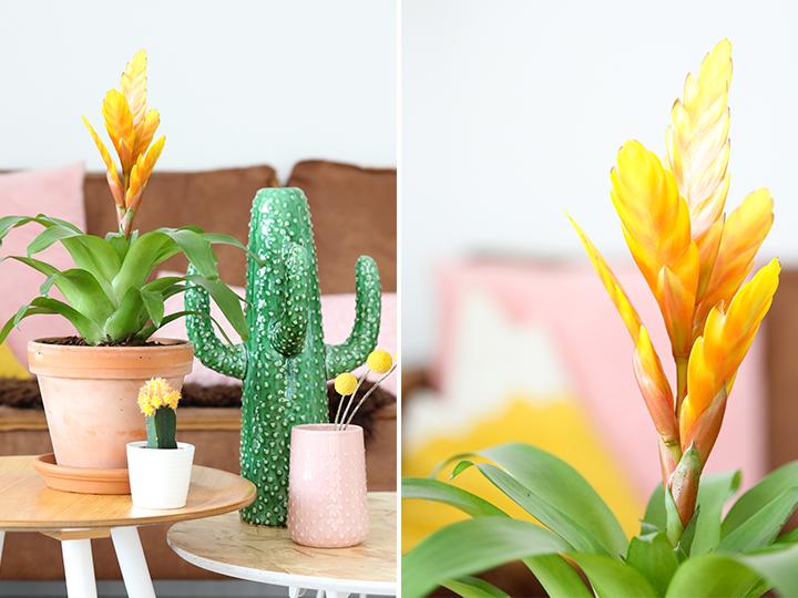 styling met planten