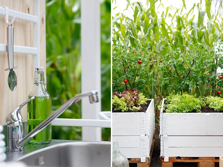 Verbouw je eigen groente